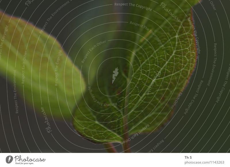 Blatt Natur Pflanze schön grün Farbe Blatt ruhig Bewegung Frühling natürlich Design frisch elegant authentisch Energie ästhetisch