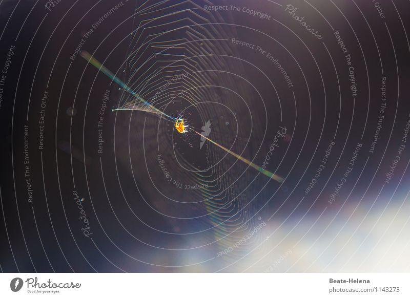 Aktives Networking Sonnenlicht Sommer Spinne Kommunizieren schaukeln warten rund Netzwerk Zusammenhalt Spinnennetz Verbindung schillernd Schnur spinnen