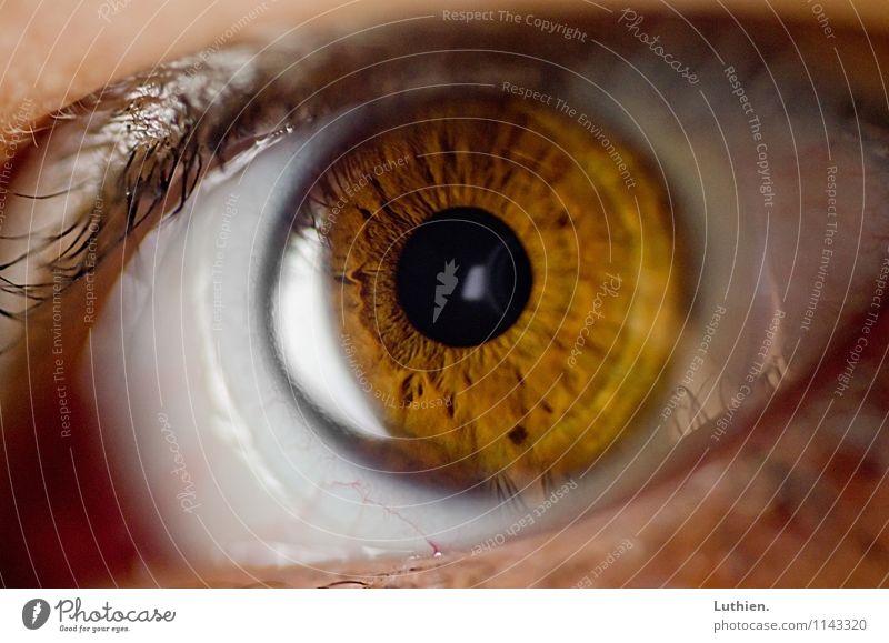 Makroauge Auge beobachten Fernsehen schauen Blick Aggression bedrohlich Ekel gruselig natürlich rund schleimig braun gelb Gefühle Begierde Wachsamkeit
