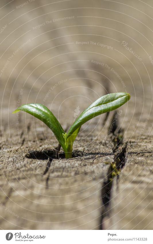 Wo ein Wille da ein weg 2 Natur Pflanze grün Blatt Tier Umwelt Garten außergewöhnlich wild Wachstum Ziel Optimismus