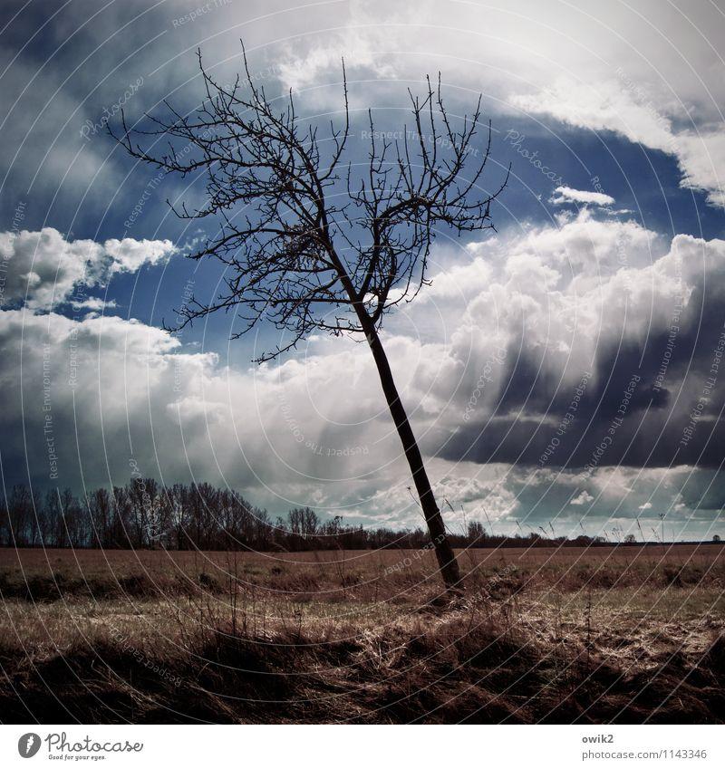Wind bekommen Umwelt Natur Landschaft Pflanze Himmel Wolken Horizont Klima Wetter Schönes Wetter Sturm stehen Wachstum Kraft Mut Leidenschaft Akzeptanz geduldig