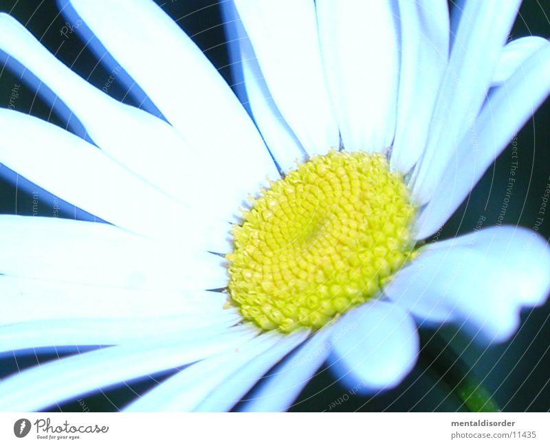 white Flower *3 weiß Blume grün Pflanze