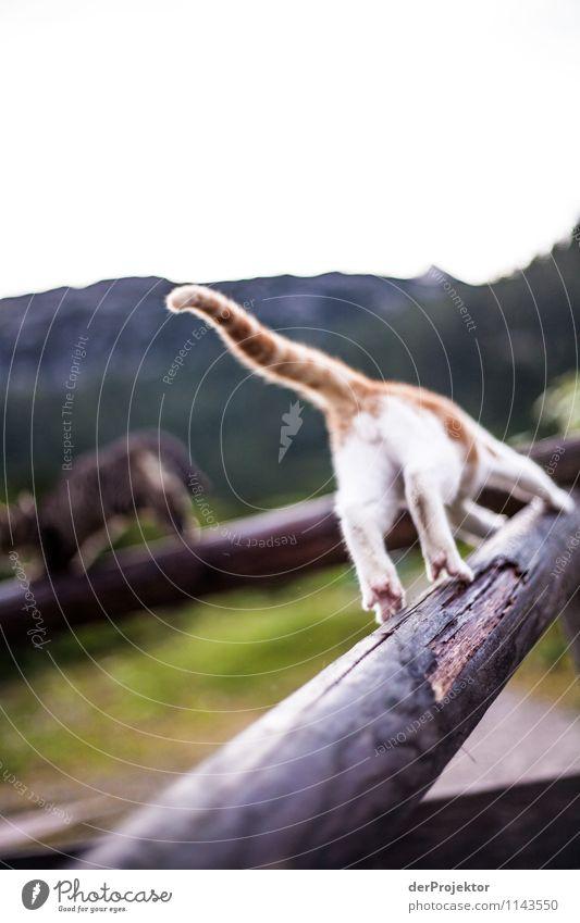 Auf der Flucht Katze Natur Pflanze schön Landschaft Tier Umwelt Berge u. Gebirge Gefühle Sport Spielen ästhetisch Alpen sportlich Hütte Haustier