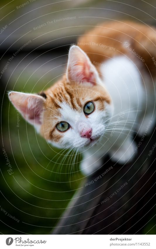 Katze Nr. 2978 Umwelt Natur Tier Haustier ästhetisch Gefühle Fröhlichkeit Zufriedenheit Lebensfreude Coolness Kitsch schön Ohr Pfote Schnurrhaar Schnurren
