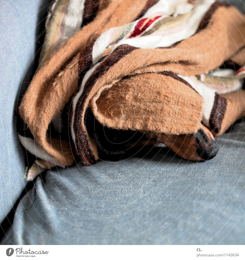 schnarchnase Häusliches Leben Wohnung Sofa Tier Haustier Hund Tiergesicht Dackel Nase 1 Decke schlafen lustig niedlich Glück Zufriedenheit Tierliebe Farbfoto