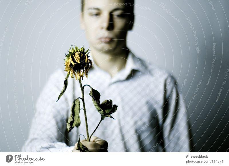 Heul doch! Mann Pflanze Blume gelb Traurigkeit Blüte Vergänglichkeit süß Freundlichkeit Blühend Geschenk Trauer verfallen Ernte Verzweiflung Sonnenblume