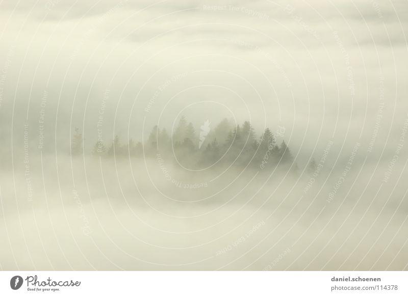 nebelige Weihnachtskarte (Nr 21) Nebel Wolken schwarz weiß abstrakt Hintergrundbild Baum Herbst Schwarzwald Wald Winter Licht Tanne Luft Kontrast