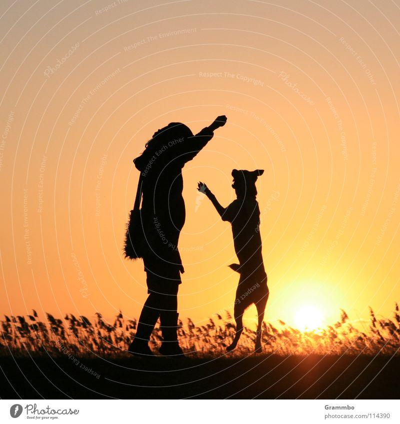 Ich bin genau so groß wie du! Hund Frau Sonnenuntergang Abendsonne Gegenlicht Silhouette Freude Frende Lilli