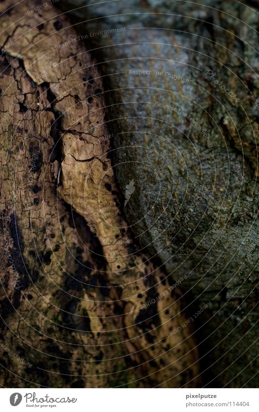 balance Baum Baumrinde Holz Holzmehl alt Erfahrung Baumstamm Kontinuität Yin und Yang Kork Korken Makroaufnahme Nahaufnahme Erde Sand Kontrast
