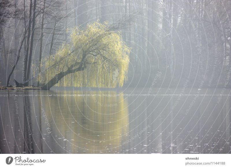 Hücker Moor Frühling Baum Trauerweide Weide Seeufer Sumpf grün Frühlingsgefühle Leben Farbfoto Außenaufnahme Textfreiraum rechts Textfreiraum unten Morgen