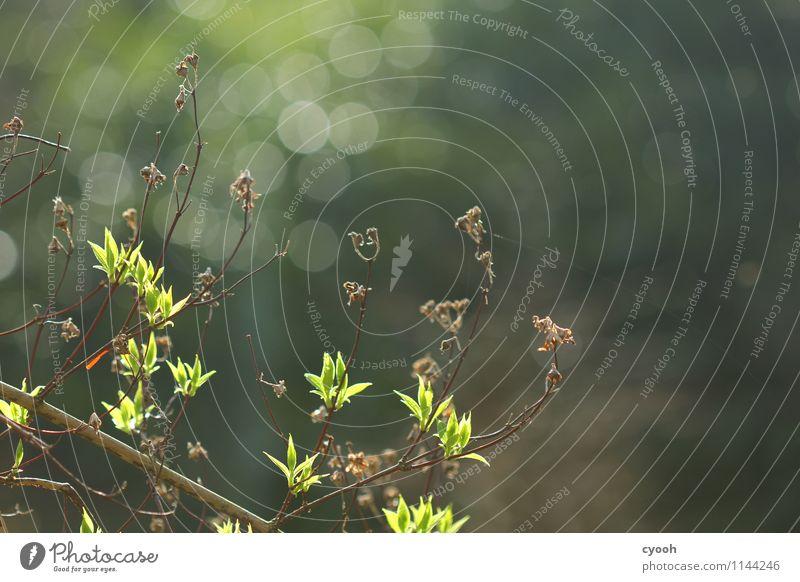 Und endlich wird es grün! Natur Pflanze Baum Blatt Wald Leben Frühling Glück Zeit Garten Park Zufriedenheit Wachstum frisch Kraft