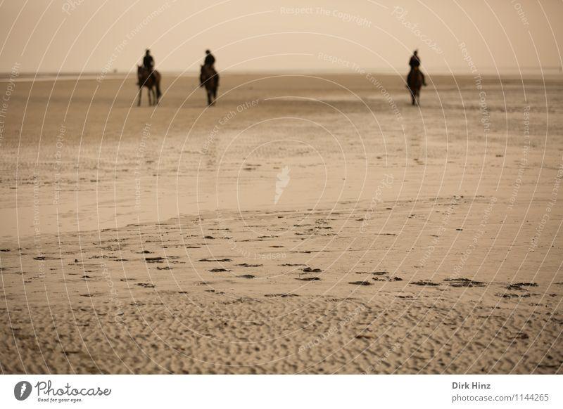 Wattreiter Mensch Natur Ferien & Urlaub & Reisen Erholung Meer Landschaft Tier Umwelt braun Sand Horizont Aussicht entdecken Spuren Nordsee Wattenmeer