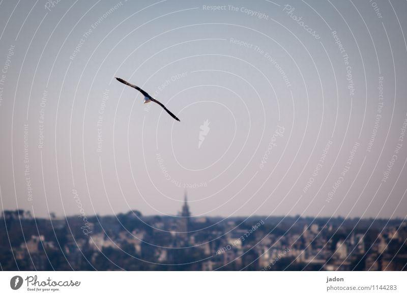 einzelflieger. elegant Jagd Umwelt Natur Landschaft Luft Meer Atlantik Hafenstadt Skyline Tier Vogel Flügel Möwe 1 fliegen Unendlichkeit maritim Leichtigkeit
