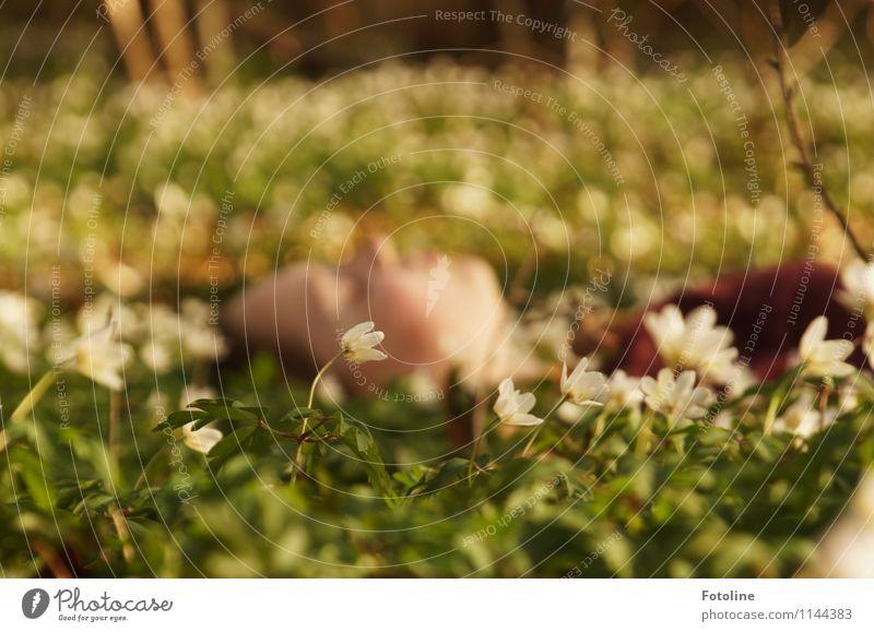 Endlich Frühling!!! Mensch Natur Jugendliche Pflanze grün weiß Junge Frau Blume Landschaft Mädchen Wald Umwelt Gesicht Blüte natürlich