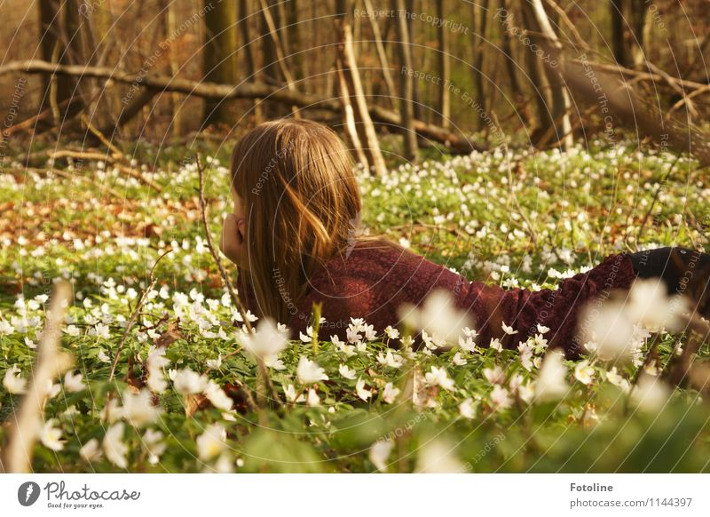 Märchenwald Mensch feminin Mädchen Junge Frau Jugendliche Kindheit Körper Kopf Haare & Frisuren 1 8-13 Jahre Umwelt Natur Landschaft Pflanze Frühling