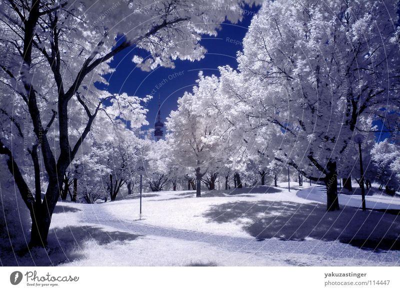 weißer Sommer 2 Himmel weiß Baum blau Wiese Rasen Sträucher München Bayern Infrarotaufnahme Farbinfrarot Olympiapark Olympiaturm