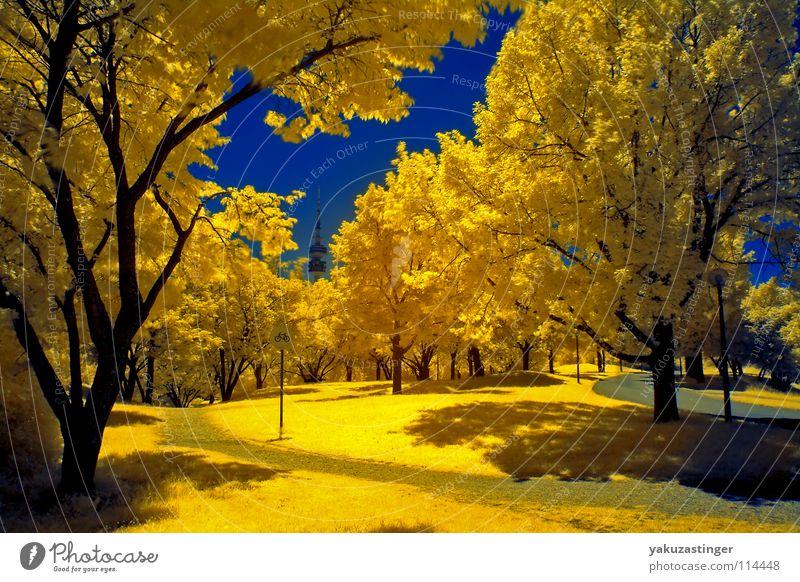 Klimawandel Himmel Baum blau Sommer gelb Wiese Rasen Sträucher Klima München Verkehrswege Dürre Bayern Infrarotaufnahme Farbinfrarot Olympiapark