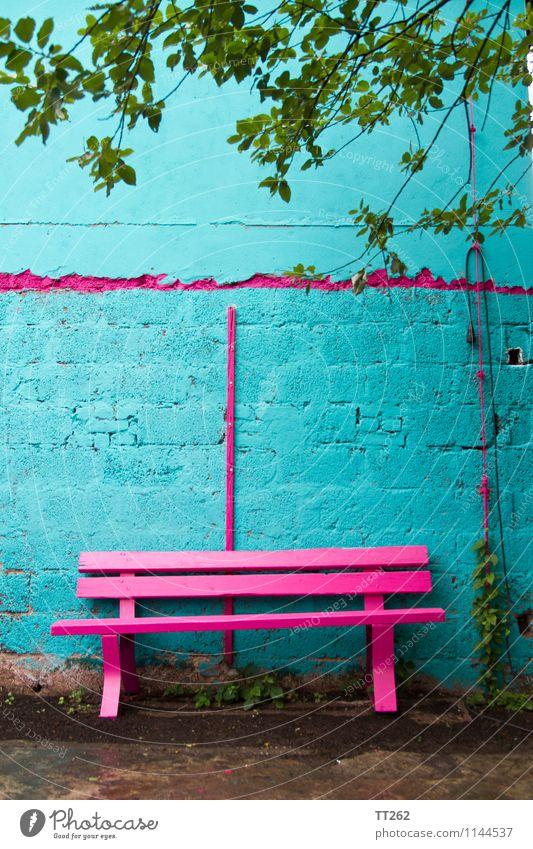 Banküberfall Mauer Wand Garten sitzen blau mehrfarbig grün rosa grell magenta zyan Farbfoto Außenaufnahme Textfreiraum oben Tag Licht Schwache Tiefenschärfe
