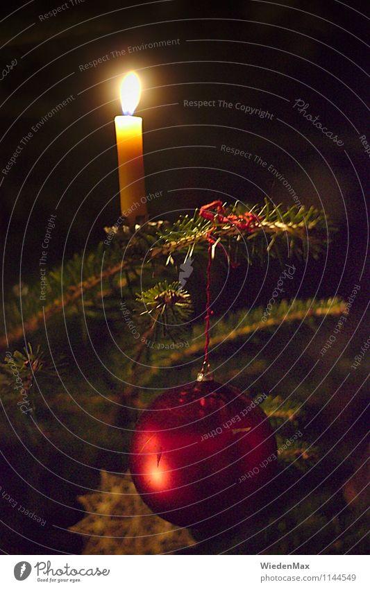 Christbaum Weihnachten & Advent schön Baum Feste & Feiern Stimmung Häusliches Leben Fröhlichkeit Kerze Weihnachtsbaum Tanne Christbaumkugel Kerzenschein
