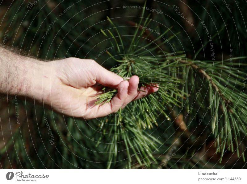 Nadelbaum Natur Mann grün Baum Hand Liebe berühren zart Kontakt Verbindung Nadelbaum Nadel Tannennadel