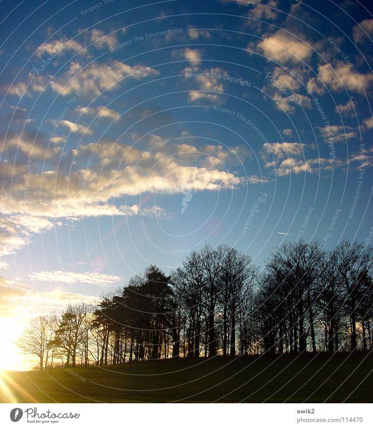 Warmer Dezember Himmel Natur Pflanze Baum Landschaft Wolken Winter Wald Umwelt Beleuchtung hell Horizont Idylle Klima Ast Flugzeug