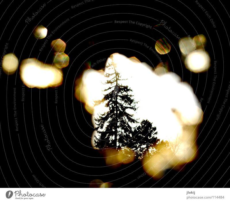 Traumzauberbaum Baum Tanne Winter dunkel schwarz Loch Gegenlicht mehrfarbig Spektralfarbe spektral kalt verfallen Verfall Einsamkeit spionieren Flirren