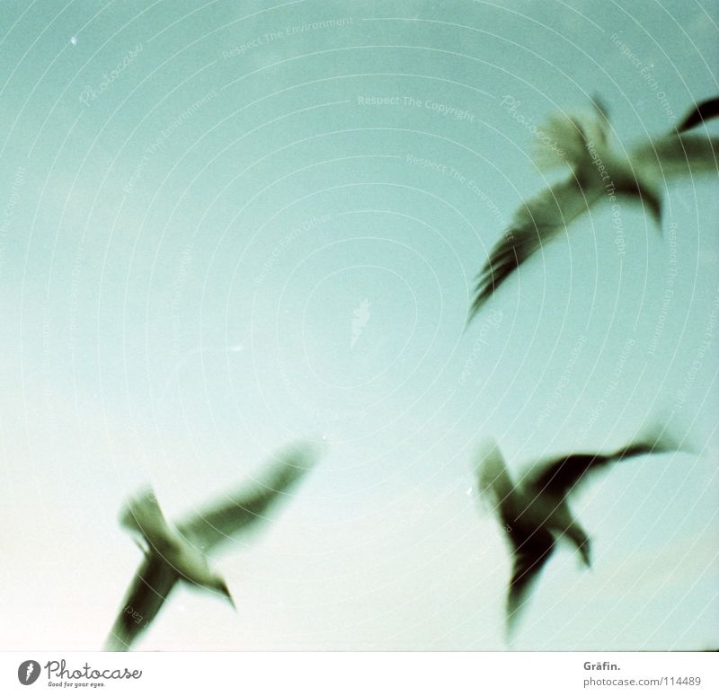 Flatterhaft Himmel Vogel fliegen 3 Feder Flügel Flucht Möwe aufsteigen Nervosität flattern flüchten unzuverlässig