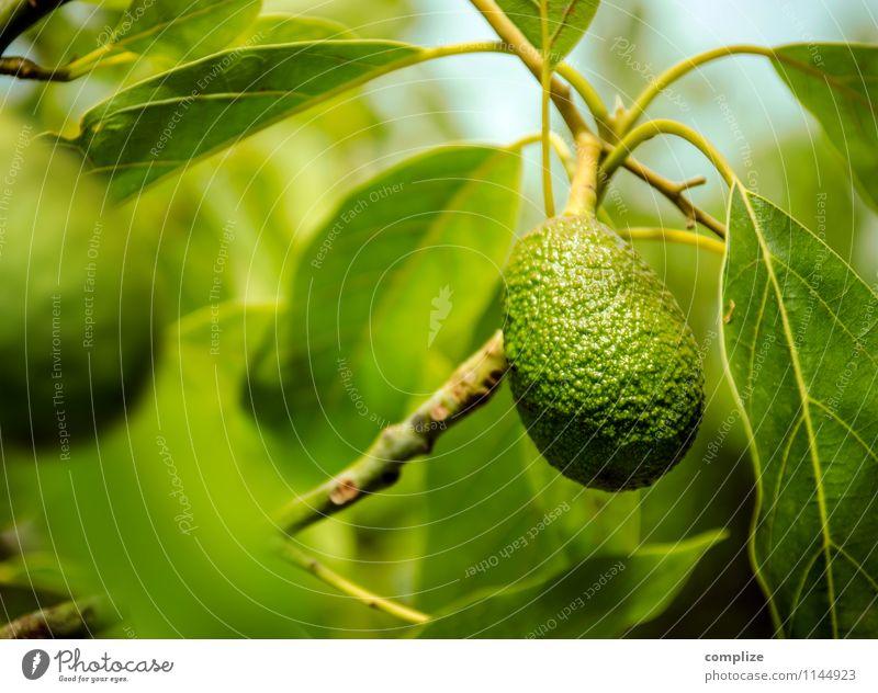 Avokado am Baum Himmel Natur Pflanze grün Blatt Gesunde Ernährung Umwelt Essen Gesundheit Lebensmittel Frucht Klima Fitness Wellness