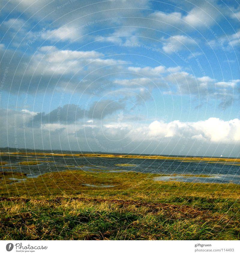 herbstlandschaft IV Natur Himmel Meer Strand Wolken Herbst Wiese Gras Landschaft Küste Vergänglichkeit Jahreszeiten Nordsee November Oktober schlechtes Wetter