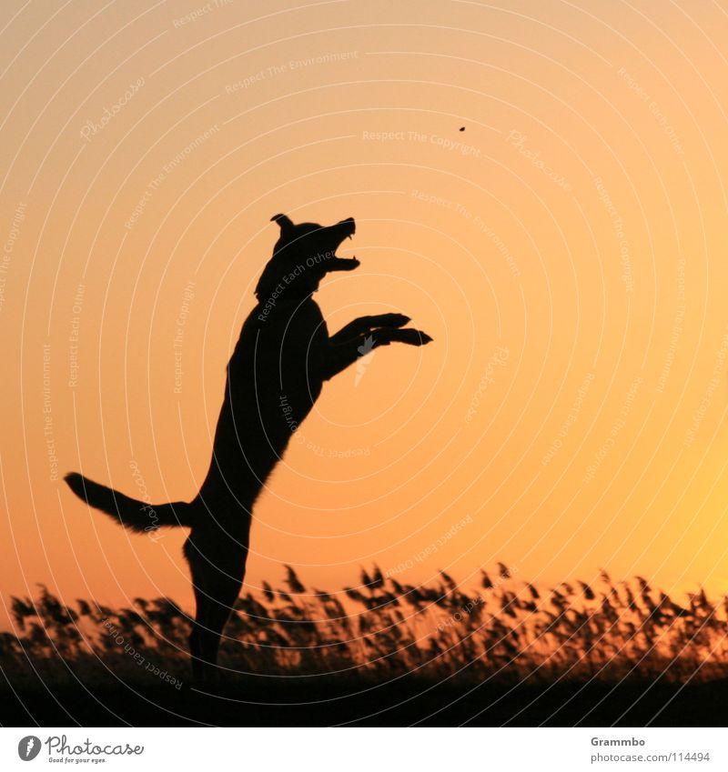 Die ballistische Kurve Hund Säugetier Abenddämmerung Deich Usedom Abendsonne