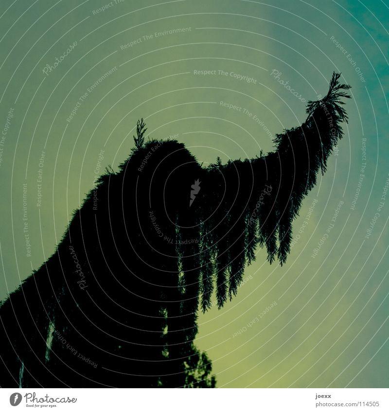 Indianertanz Baum diagonal Fabelwesen Hippie mystisch Nadelbaum Oberkörper Frieden Tanne unheimlich Waldmensch Zauberwald obskur Arme Ast beschwören Feder