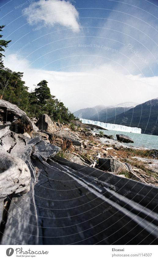 Patagonia - Perito Moreno Gletscher See Wolken Baum Baumstamm Südamerika Wetter Eis Himmel toter Baum Perspektive Natur Landschaft Patagonien Anden