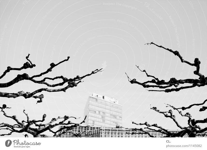 bäume und häuser Umwelt Natur Wolkenloser Himmel Wetter Schönes Wetter Baum Zweige u. Äste Düsseldorf Stadt Hochhaus Gebäude Architektur komplex Schwarzweißfoto