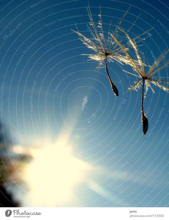 Sommergruß Schweben Zusammensein Löwenzahn träumen Himmel Sonne frei Freiheit fliegen fallen jarts