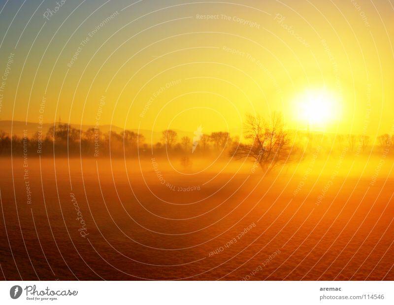 Licht Sonnenaufgang Baum Wiese Landschaft Deutschland Nebel Himmelskörper & Weltall Viernheim