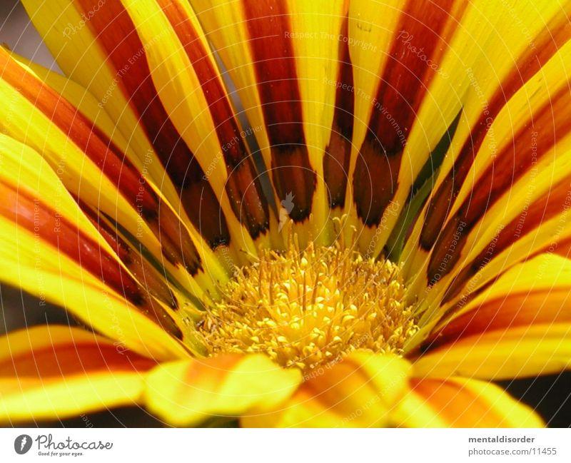 Gartenblume1 *Serie grün rot gelb Blüte orange