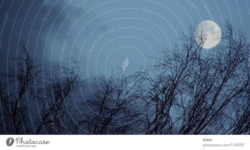 blue4u Ferne Himmel Wolken Nachthimmel Horizont Mond Nebel Baum blau Gefühle Macht Vertrauen geheimnisvoll Baumkrone Kulisse Beleuchtung rückwärts vorwärts