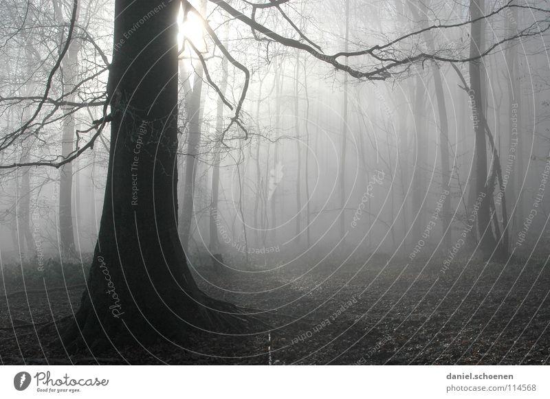 Nebelwald weiß Baum Sonne Winter schwarz Wald Herbst Luft Nebel Hintergrundbild Wetter Ast Schwarzwald abstrakt