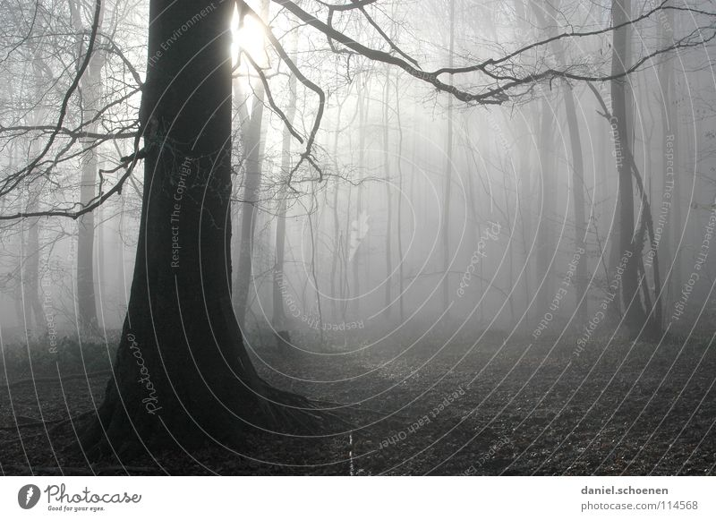 Nebelwald weiß Baum Sonne Winter schwarz Wald Herbst Luft Hintergrundbild Wetter Ast Schwarzwald abstrakt