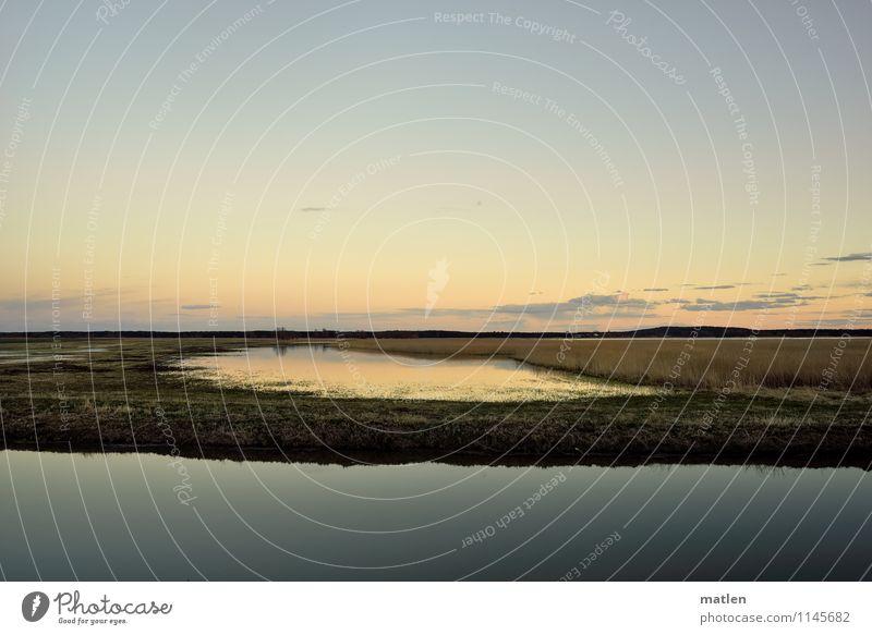 Augenweide Natur Landschaft Pflanze Wasser Himmel Horizont Sonnenaufgang Sonnenuntergang Frühling Wetter Schönes Wetter Gras Wiese Küste Seeufer Flussufer Moor