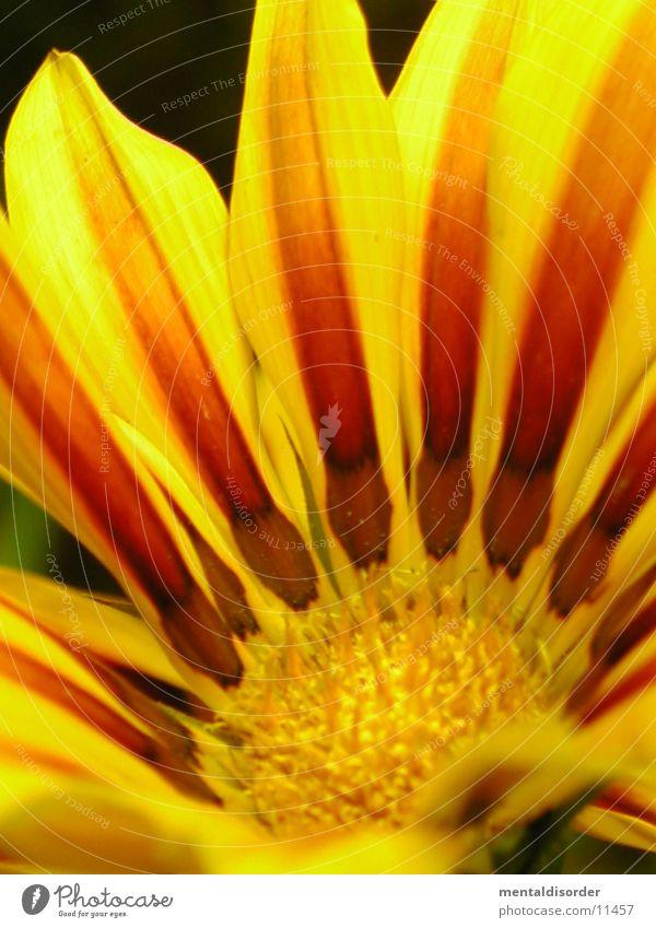 Gartenblume3 *Serie grün rot gelb Blüte orange