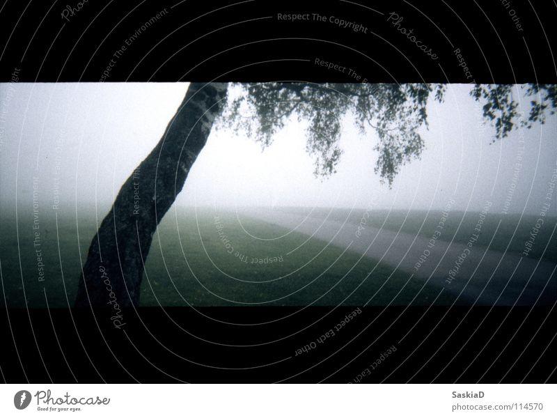 weg ins nichts Nebel Baum Birke grün Wiese Stimmung minimalistisch Trauer Verzweiflung Frieden Landschaft kleinbild Wege & Pfade Straße grass minimal. licht