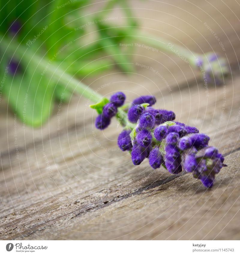 Lavendel Blume Blumenstrauß Kräuter & Gewürze Bündel Erholung Fliederbusch Isoliert (Position) Jahreszeiten violett Natur Parfum Pflanze Sommer Nahaufnahme
