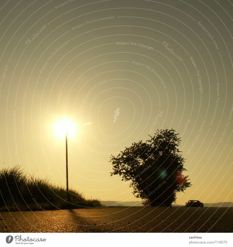 Heiss am Stiel Allee Landstraße Morgen Morgennebel Sonnenaufgang Gegenlicht blenden Baum Silhouette Hügel Abstufung Arbeitsweg Sonnenenergie Herbst Wetter