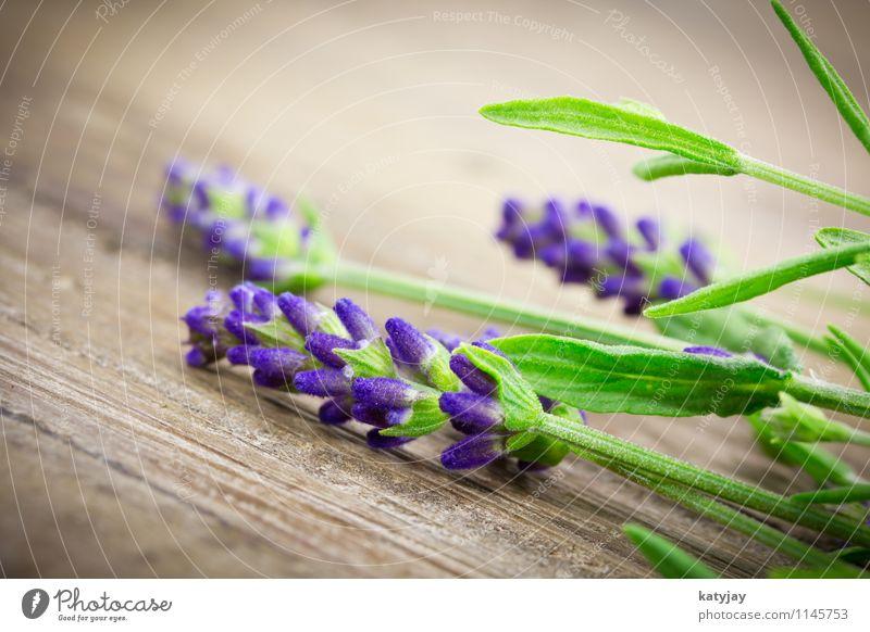 Lavendel Blume Blumenstrauß Kräuter & Gewürze Bündel Blüte Fliederbusch Jahreszeiten violett Natur Pflanze Sommer Nahaufnahme Blühend aromatisch Erholung