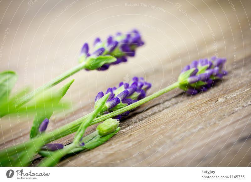 Lavendel Natur Pflanze Sommer Erholung Blume Blüte natürlich Holz Hintergrundbild Tisch Blühend Kräuter & Gewürze Jahreszeiten violett nah Blumenstrauß
