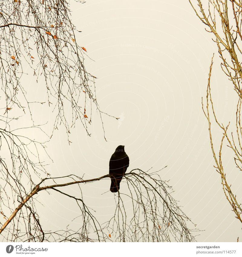 krâwa (althochdeutsch), quadrat Krähe Rabenvögel Vogel Baum Blatt laublos Winter Herbst hocken hockend Raum schlechtes Wetter Wolken ruhig Erholung Trauer