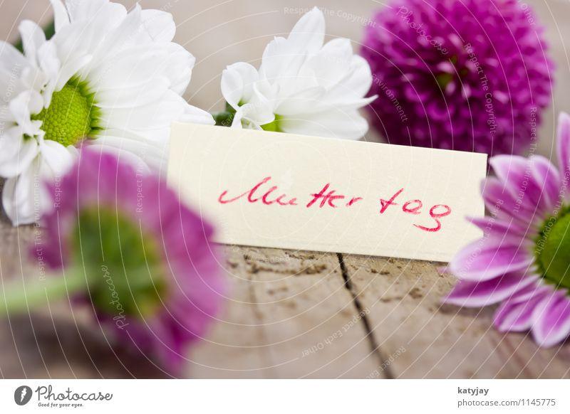 Muttertag Blume Glückwünsche Geschenk Ehefrau Ehre Feste & Feiern Freude Postkarte rot Schilder & Markierungen Liebe Eltern Gutschein Dekoration & Verzierung