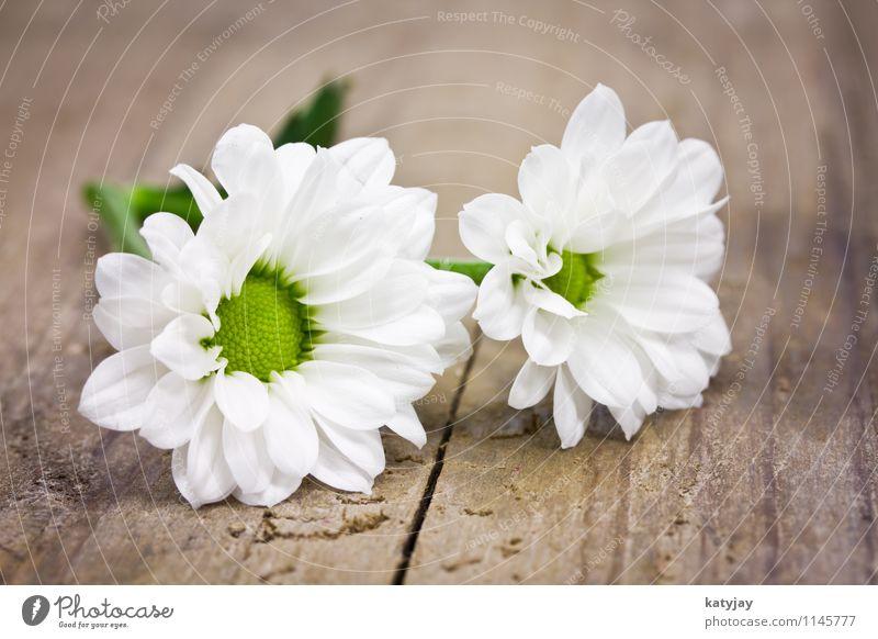 weisse Blümchen Blume Muttertag Glückwünsche Geschenk Ehefrau Ehre Geburtstag Valentinstag Freude weiß Postkarte Liebe Hochzeit Gutschein