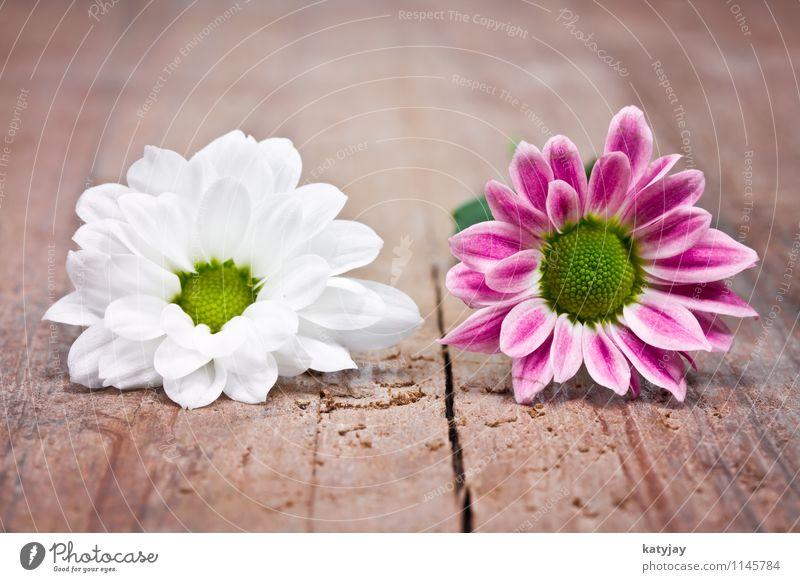 pinke Blumen Muttertag Glückwünsche Geschenk Ehefrau Ehre Geburtstag Valentinstag Freude rot Postkarte Liebe rosa Gutschein Dekoration & Verzierung schenken